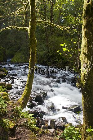 usa oregon columbia gorge wild river