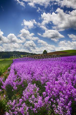 usa oregon willamette valley farming in