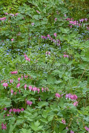usa pennsylvania spring scenic credit as