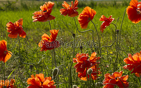 lancaster county pennsylvania field of bright