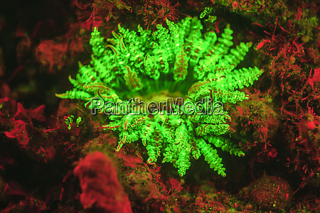 underwater fluorescence emitted and photographed using
