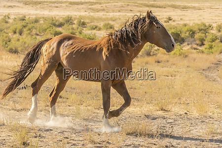 usa utah tooele county wild horse