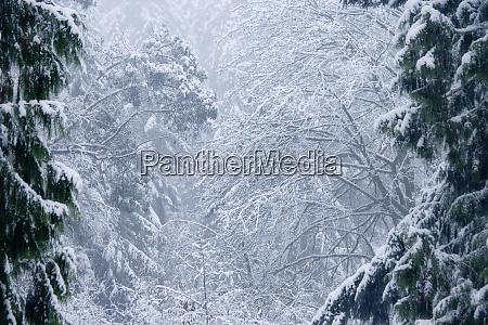 usa washington seabeck snowstorm in a