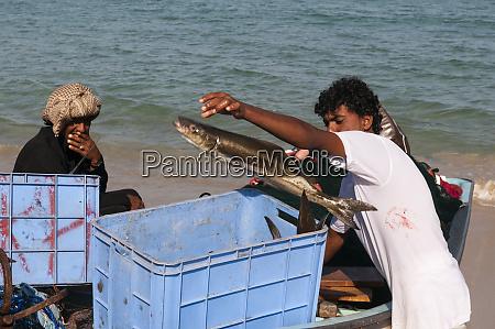 fishermen ras al hadd oman