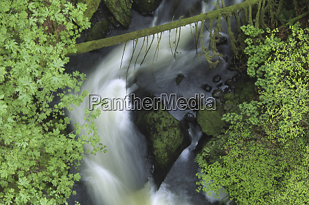 tokul creek from rail trestle on