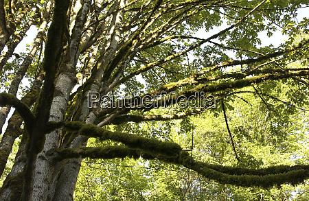 usa wa snoqualmie falls forested area