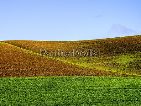 usa washington state palouse spring wheat