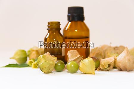 cardiospermum halicacabum aromatic medicinal plant