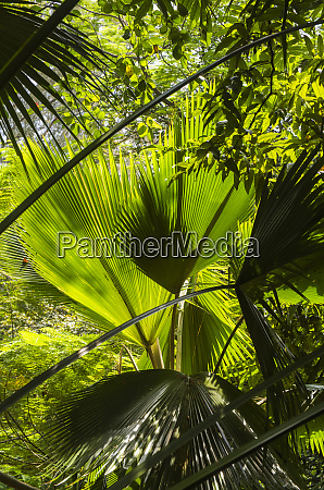 singapore fort canning park tropical foliage