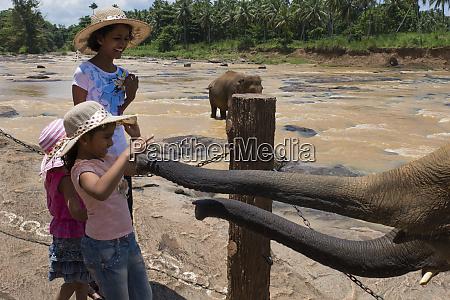 sri lanka pinnawela elephant orphanage est
