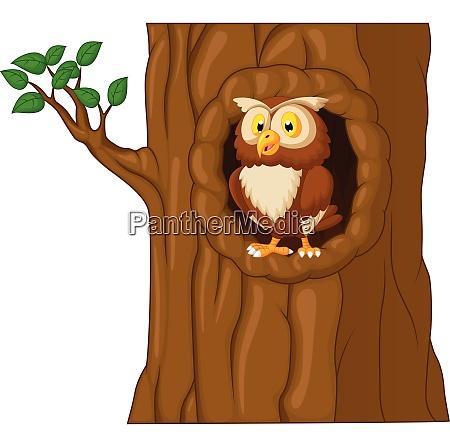 cartoon owl in tree