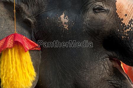 elephant tourist rides ayutthaya thailand
