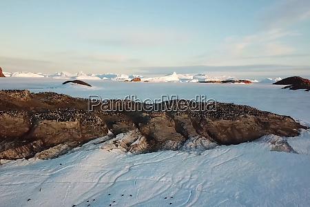 colonies of penguins in antarctica on