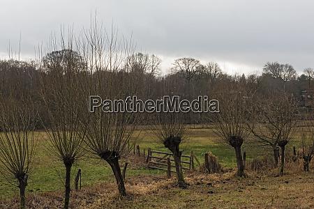 the volksdorfer pond meadows in winter