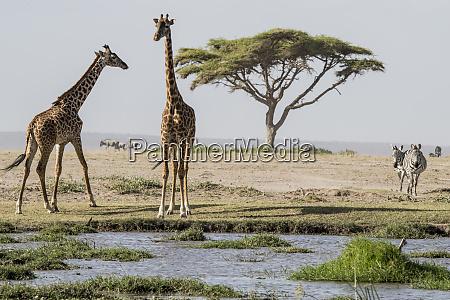 east africa kenya outside amboseli national