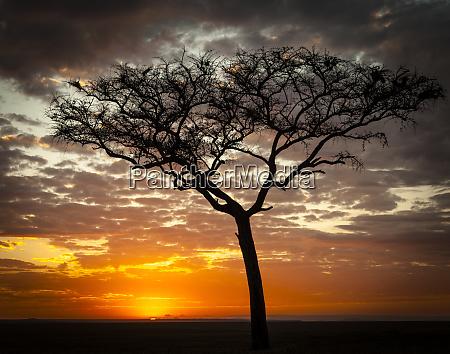 africa kenya masai mara sunrise