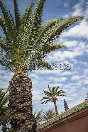 africa morocco marrakesh an upward facing