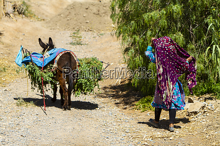 meknes morocco donkey carrying load