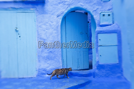 cat in doorway chefchaouen morocco