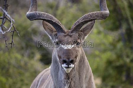 africa namibia etosha national park close