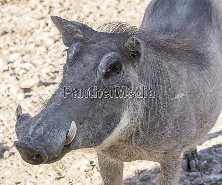 africa namibia okapuka ranch portrait of