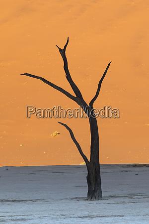 dead silhouetted trees in deadvlei sossusvlei