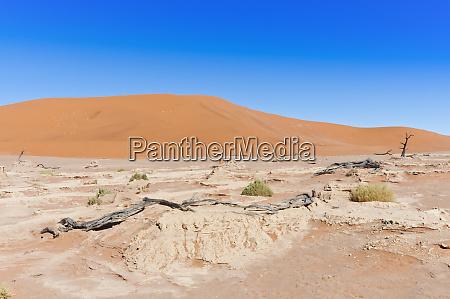 dead vlei sossusvlei namib desert namib