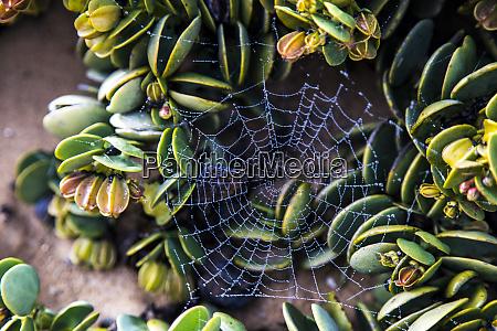 africa namibia sossusvlei spider web in
