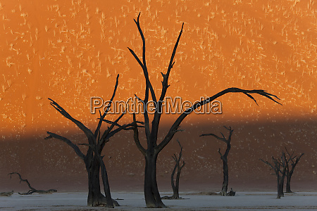 dead trees in dry clay pan