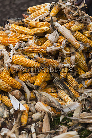 africa rwanda ruhengeri pile of corn