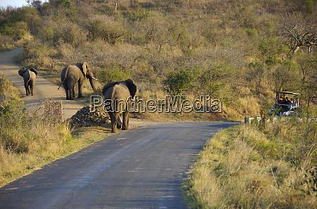 africa south africa kwazulu natal hluhluwe