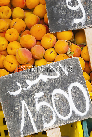 apricots for sale tabarka tunisia north