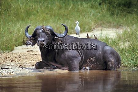 africa uganda murchison falls np an