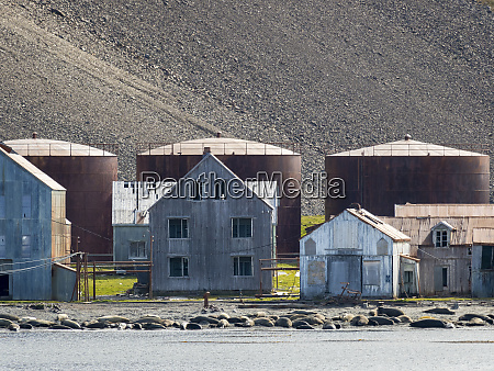 ruins of stromness whaling station in