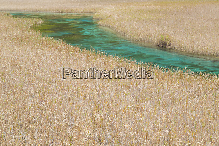 river reed lake jiuzhaigou national park