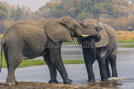 botswana okavango delta khwai concession two