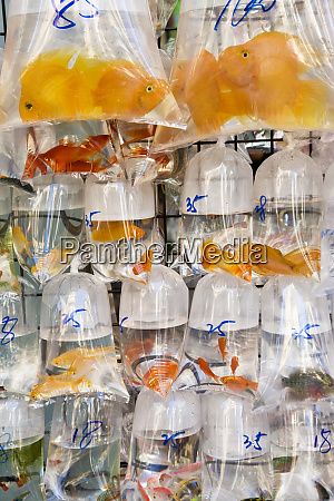 goldfish at goldfish market hong kong