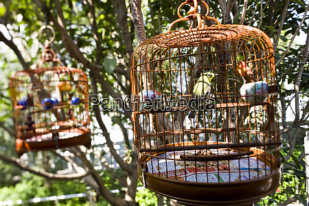 songbirds in cages bird market hong
