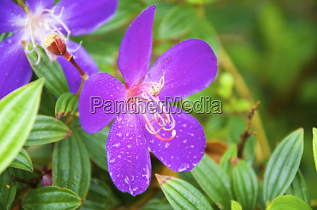sai kung a princess flower or
