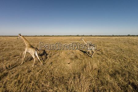 africa botswana chobe national park aerial