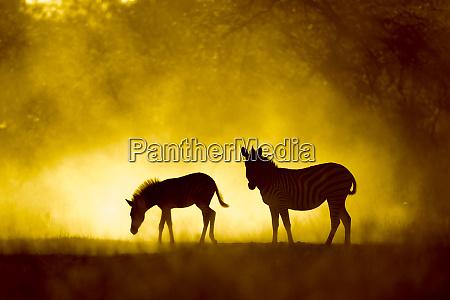 africa botswana moremi game reserve plains
