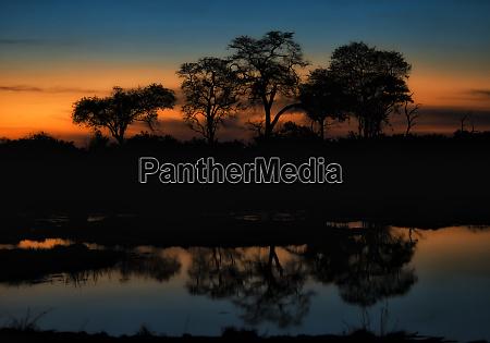 soft sunset behind trees on okavango