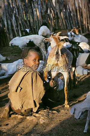 young hamar boy milks the family