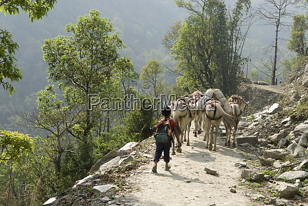 nepal annapurna a young boy leads
