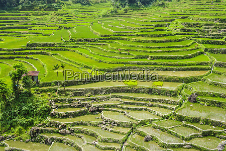 hapao rice terraces part of the