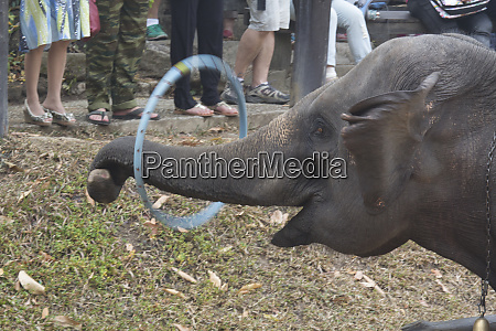 thailand maesa elephant camp elephant performs
