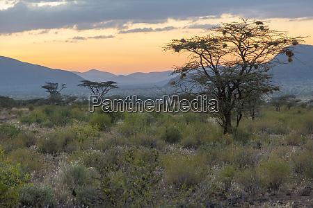 africa kenya samburu national reserve sunset