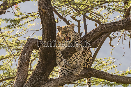 africa, , kenya, , samburu, national, reserve., african - 27741564