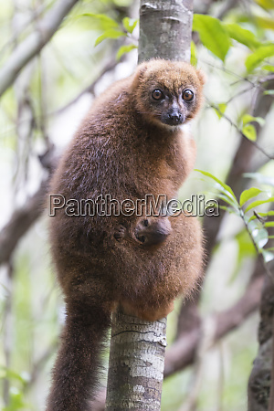 africa madagascar akaninny nofy reserve a