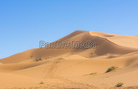 morocco sahara desert sand dunes in